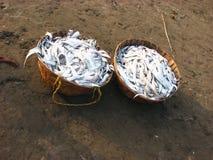 Cestas dos peixes Fotografia de Stock Royalty Free