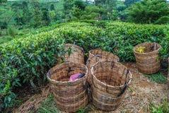 Cestas para las hojas de té Foto de archivo