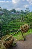 Cestas para recolher os terraços Tegallalang do arroz, Ubud, Bali, Indonésia imagem de stock royalty free