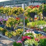 Cestini d'attaccatura del fiore nel centro di giardino Fotografia Stock