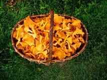 Cestino con i funghi Immagini Stock Libere da Diritti
