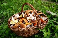 Cestino con i funghi Fotografie Stock Libere da Diritti