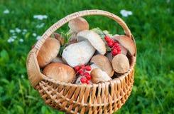 Cestino con i funghi Fotografia Stock Libera da Diritti