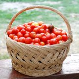 Cestino con i pomodori di ciliegia Fotografia Stock Libera da Diritti