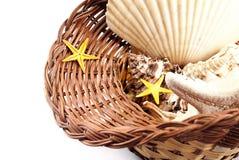 Cestino con i seashells. Fotografie Stock