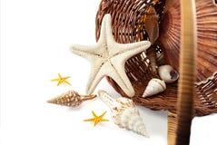 Cestino con i seashells. Fotografia Stock Libera da Diritti