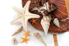 Cestino con i seashells. Immagini Stock Libere da Diritti