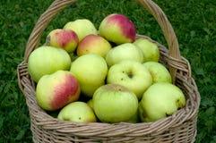 Cestino con le mele. Fotografie Stock Libere da Diritti