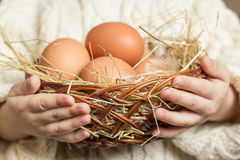 Cestino con le uova del pollo Immagini Stock