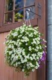 Cestino d'attaccatura di fioritura Fotografia Stock