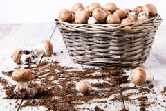 Cestino dei funghi Fotografia Stock Libera da Diritti