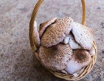 Cestino dei funghi Immagini Stock