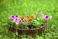 Cestino del fiore Fotografie Stock