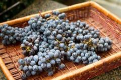 Cestino dell'uva Fotografia Stock Libera da Diritti