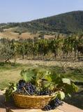 Cestino dell'uva Immagini Stock
