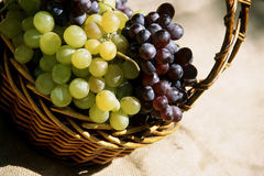 Cestino dell'uva Fotografia Stock