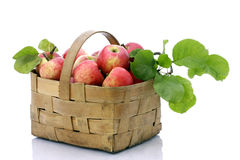 Cestino delle mele rosse su priorità bassa bianca immagine stock