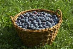 Cestino di frutta Immagine Stock Libera da Diritti