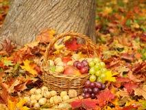 Cestino di frutta nel giardino Fotografia Stock