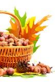 Cestino di vimini di autunno Fotografie Stock