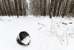 Cestino nella foresta di inverno Immagine Stock