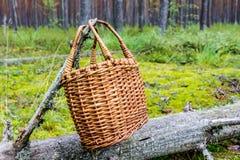 Cestino per i funghi nella foresta Fotografia Stock