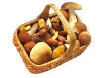 Cestino in pieno dei funghi Immagini Stock Libere da Diritti