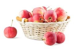 Cestino troppo pieno con le mini mele Fotografia Stock