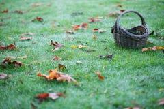 Cestino vuoto su erba con i fogli orizzontali Fotografia Stock Libera da Diritti