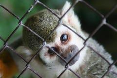 Cet animal familier observe - searchi Photos libres de droits