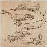 Cetaceans, Cetace - An hand drawn pack, vector sketching Royalty Free Stock Photography