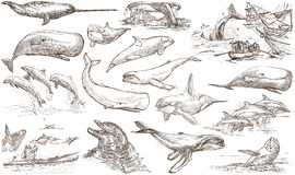 Cetaceans, Cetacea - An hand drawn pack, freehand sketching - fu Stock Images