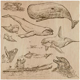Cetaceans, Cetacea - An hand drawn pack, vector sketching Royalty Free Stock Images