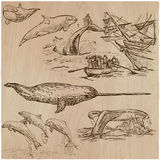 Cetaceans, Cetacea - An hand drawn vector pack, collection Royalty Free Stock Photos