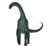 Cetiosaurusdinosaurus op Wit Stock Foto