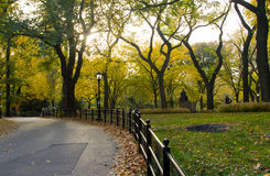 Cetral Park in Fall - New York City. Central Park, New York City - Sunlight shines through golden fall tree leaves Royalty Free Stock Image