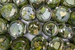 Cetrioli in acqua salata Immagini Stock Libere da Diritti