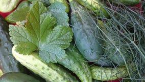 Cetrioli freschi Immagini Stock