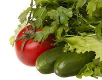 Cetrioli, pomodori con le erbe e prezzemolo Fotografia Stock