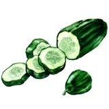Cetriolo verde fresco affettato, cetriolo tagliato, isolato, illustrazione dell'acquerello su bianco Fotografia Stock Libera da Diritti