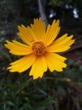 Cette fleur est pethi d'ata photographie stock libre de droits