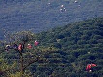 Filles dans le jardin de thé plumant des feuilles de thé photo stock