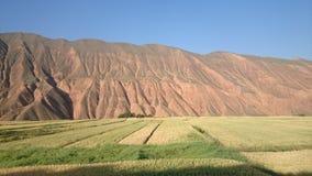 cevada da montanha e das montanhas Imagem de Stock Royalty Free