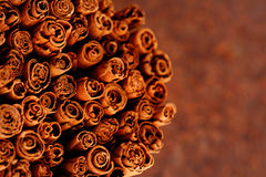 Ceylon cinnamon Royalty Free Stock Images