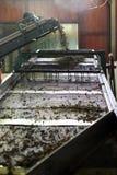 Ceylon Herbaciana fabryka, Sri Lanka Obraz Stock