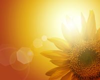 CG background of sunflower Stock Photo