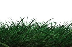 CG Grass. Computer generated grass on white background Royalty Free Stock Photography