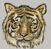 Cg painting tiger head Royalty Free Stock Photos