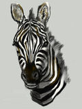Cg painting zebra head. Hand draw Royalty Free Stock Images