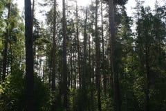 Chá à proximidade das florestas do russo, após uma pesca bem sucedida Imagens de Stock Royalty Free